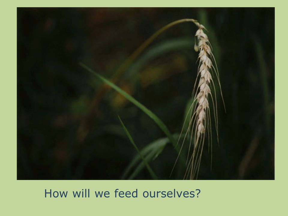 How will we feed ourselves