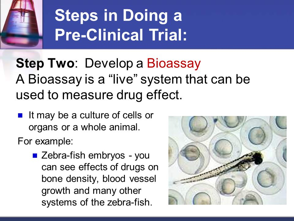 Step Two: Develop a Bioassay A Bioassay is a live system that can be used to measure drug effect.