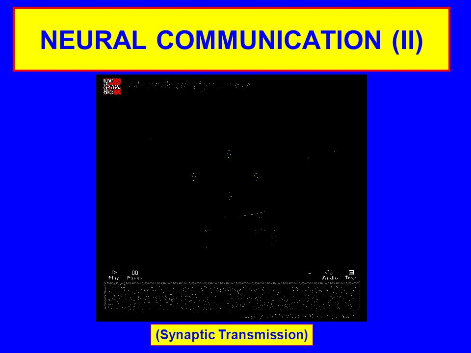 NEURAL COMMUNICATION (II) (Synaptic Transmission)