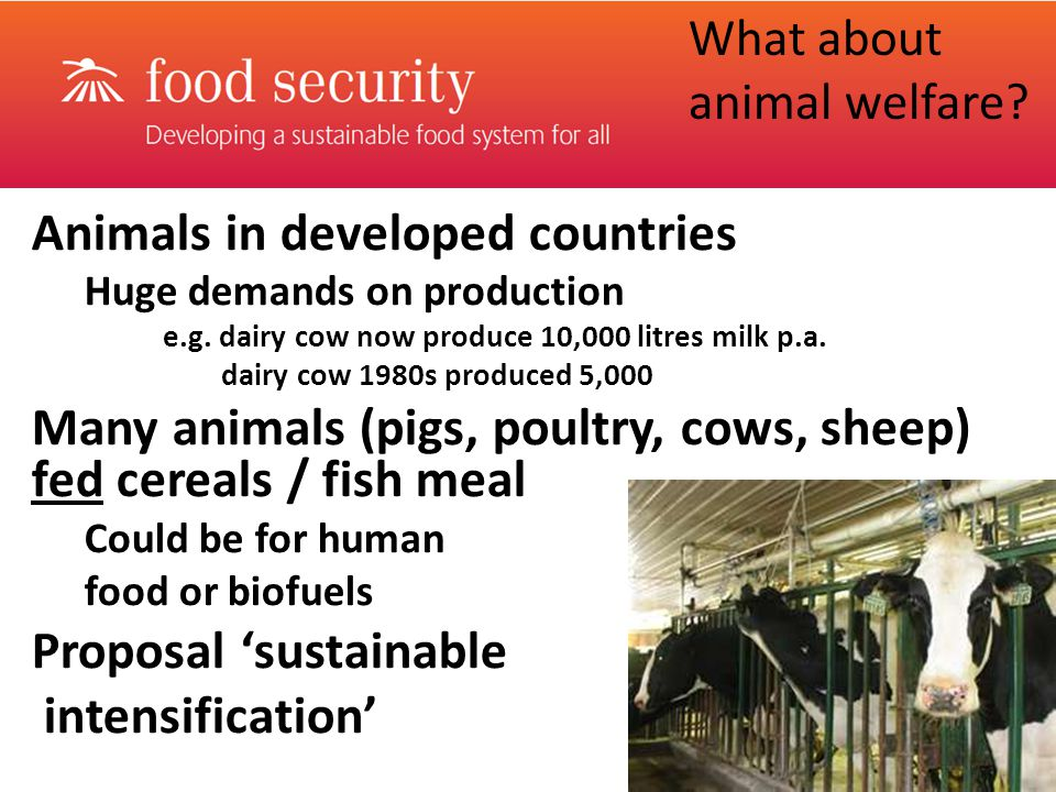 Animals in developed countries Huge demands on production e.g.