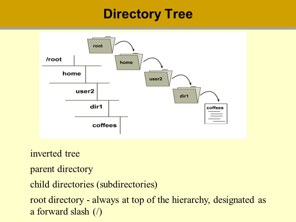 Directory Tree inverted tree parent directory child directories (subdirectories) root directory - always at top of the hierarchy, designated as a forward slash (/)
