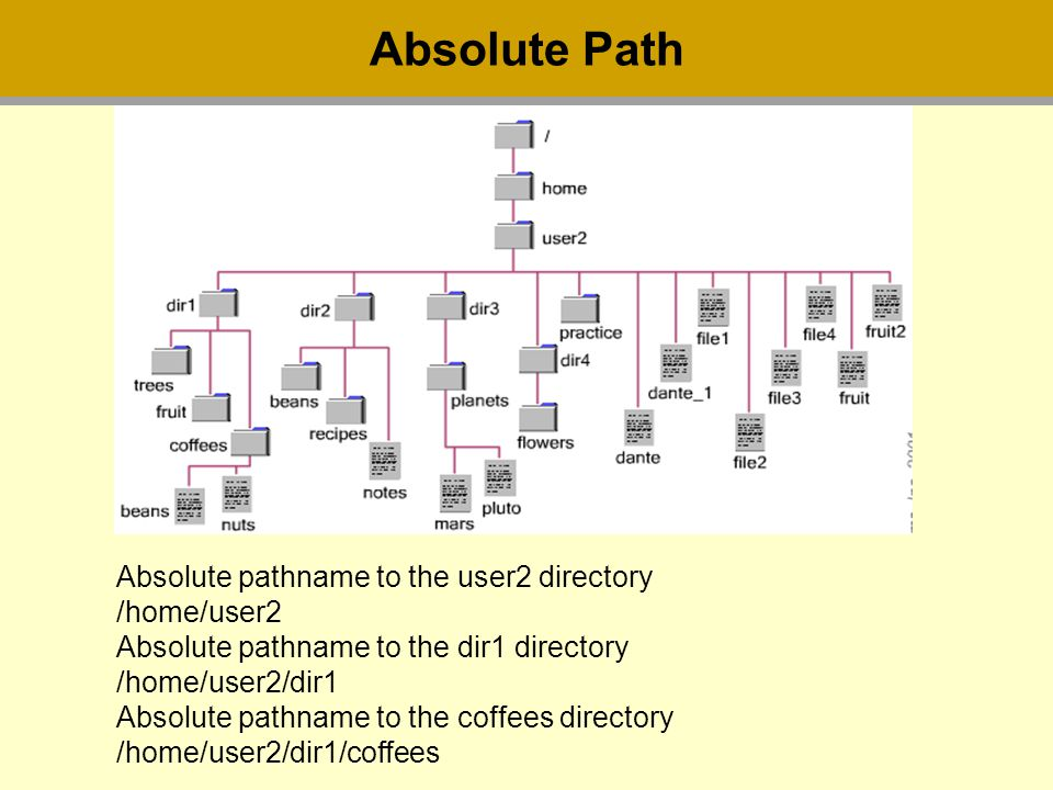 Absolute Path Absolute pathname to the user2 directory /home/user2 Absolute pathname to the dir1 directory /home/user2/dir1 Absolute pathname to the coffees directory /home/user2/dir1/coffees
