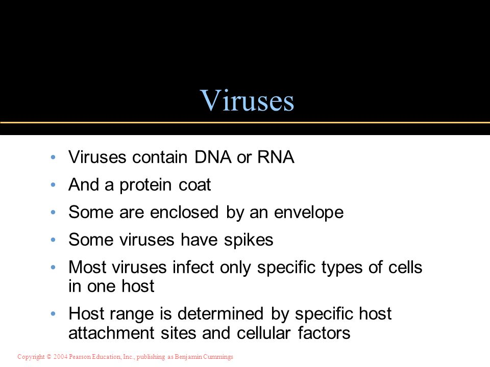 Copyright © 2004 Pearson Education, Inc., publishing as Benjamin Cummings Viruses Viruses contain DNA or RNA And a protein coat Some are enclosed by an envelope Some viruses have spikes Most viruses infect only specific types of cells in one host Host range is determined by specific host attachment sites and cellular factors