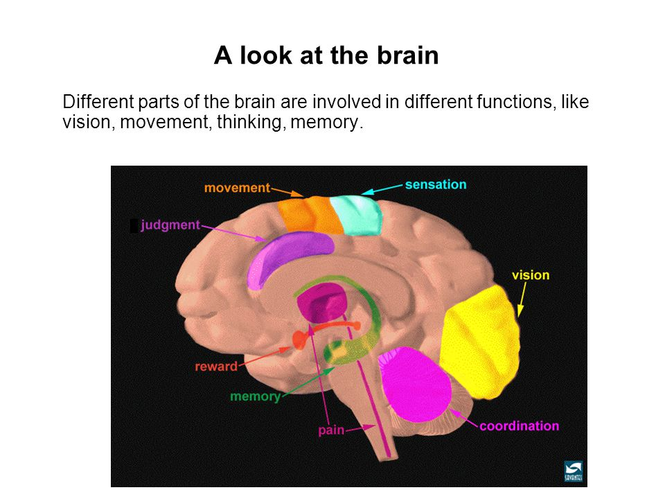 brain function for autism Brain function for autism brain function for autism psychology 340 brain function for autism the brain has forever stumped scientist on how it functions and which genetics and behavior place in the picture.