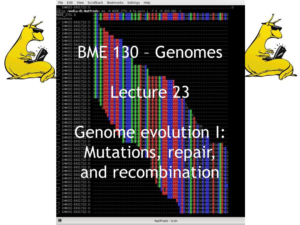 BME 130 – Genomes Lecture 23 Genome evolution I: Mutations, repair, and recombination