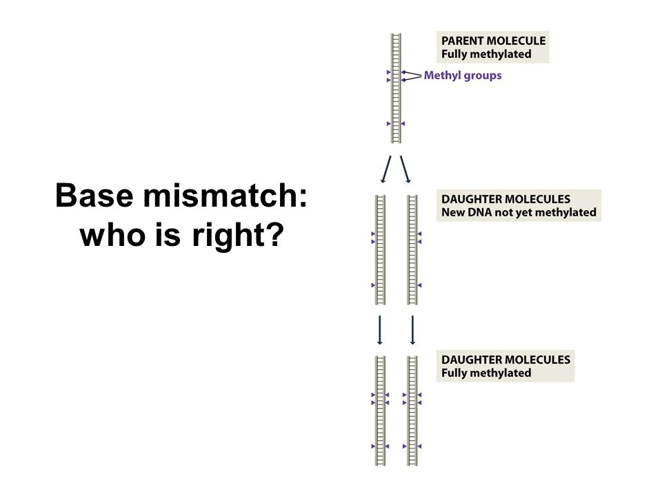 Base mismatch: who is right
