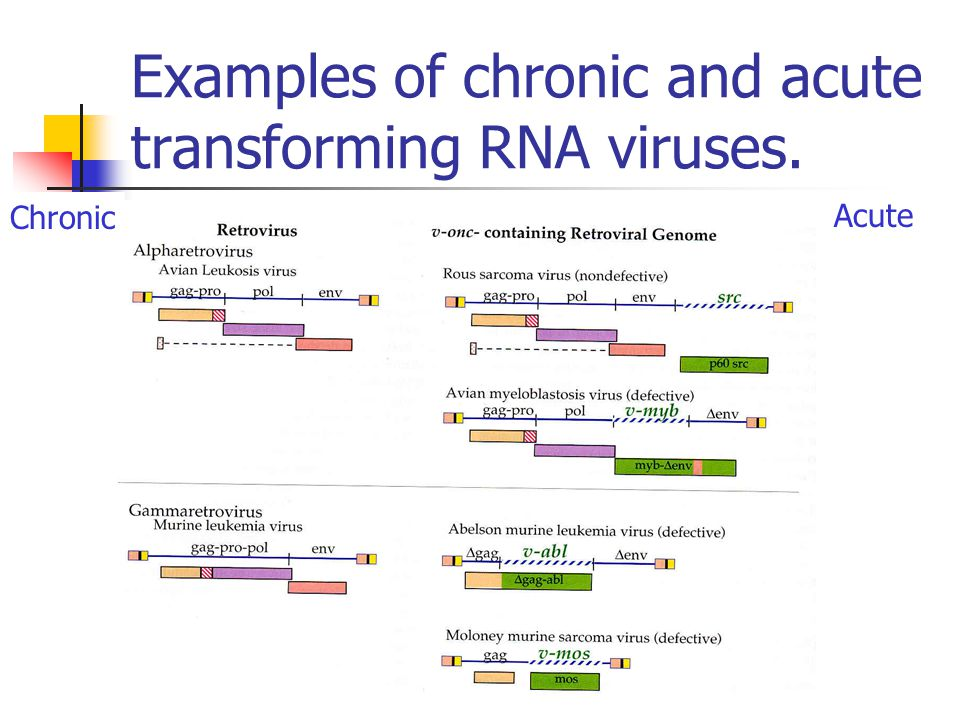 Examples of chronic and acute transforming RNA viruses. Chronic Acute