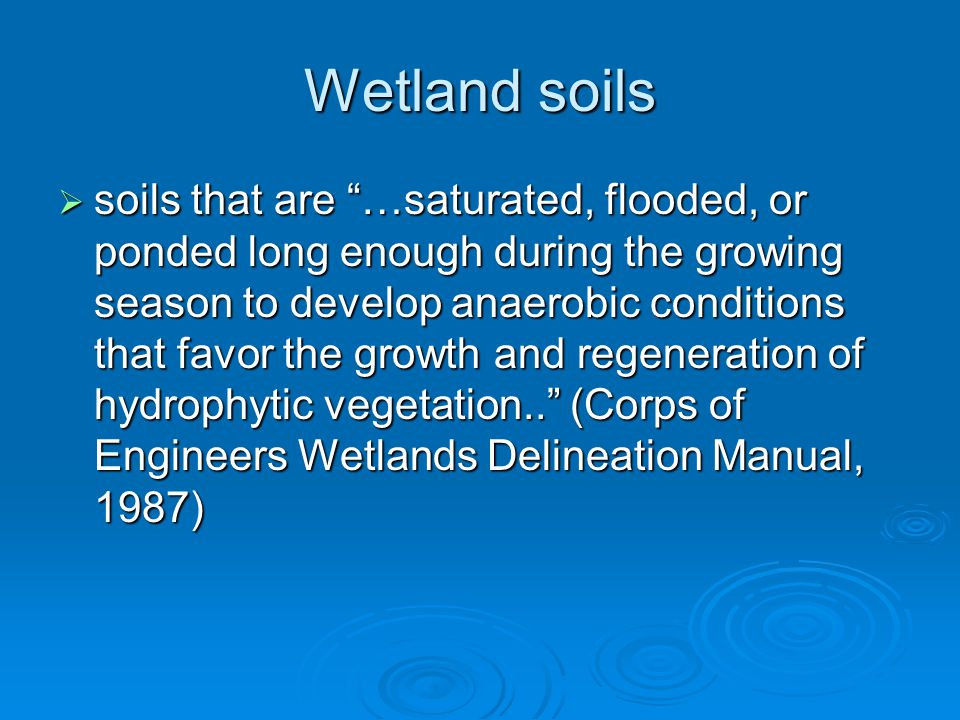 Wetland Delineation Major Areas Evaluated To Determine Presence Of