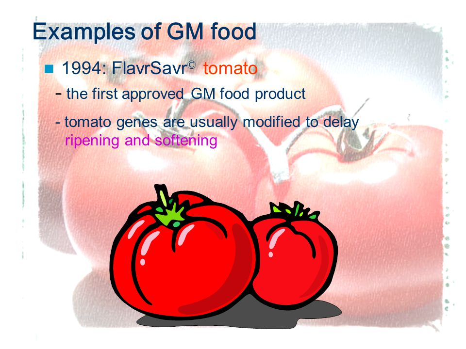 6 Examples of GM food 1994: FlavrSavr © tomato – the first approved GM food product - tomato genes are usually modified to delay ripening and softening