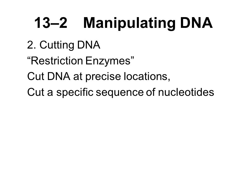 13–2Manipulating DNA 2.Cutting DNA Restriction Enzymes Cut DNA at precise locations, Cut a specific sequence of nucleotides