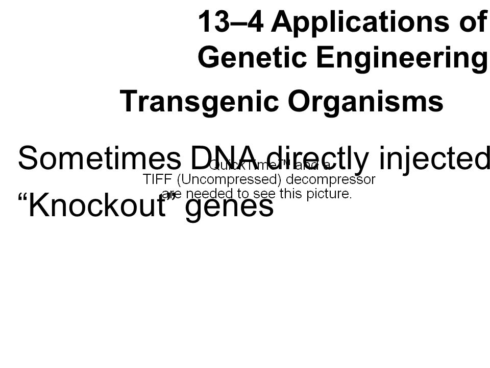 Transgenic Organisms 13–4 Applications of Genetic Engineering Sometimes DNA directly injected Knockout genes