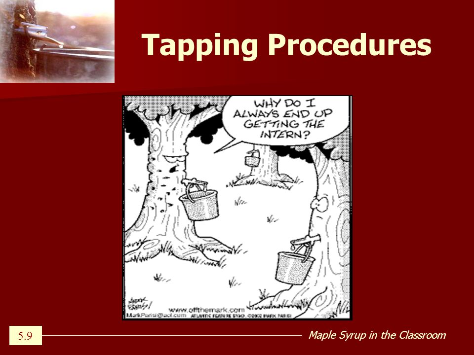 Maple Syrup in the Classroom Tapping Procedures 5.9