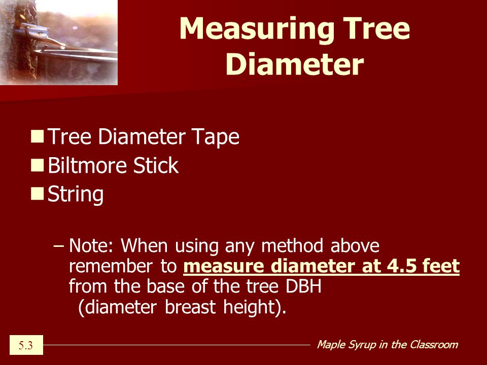 Maple Syrup in the Classroom Measuring Tree Diameter Tree Diameter Tape Biltmore Stick String – –Note: When using any method above remember to measure diameter at 4.5 feet from the base of the tree DBH (diameter breast height).