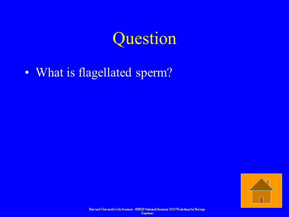 Question What is flagellated sperm.