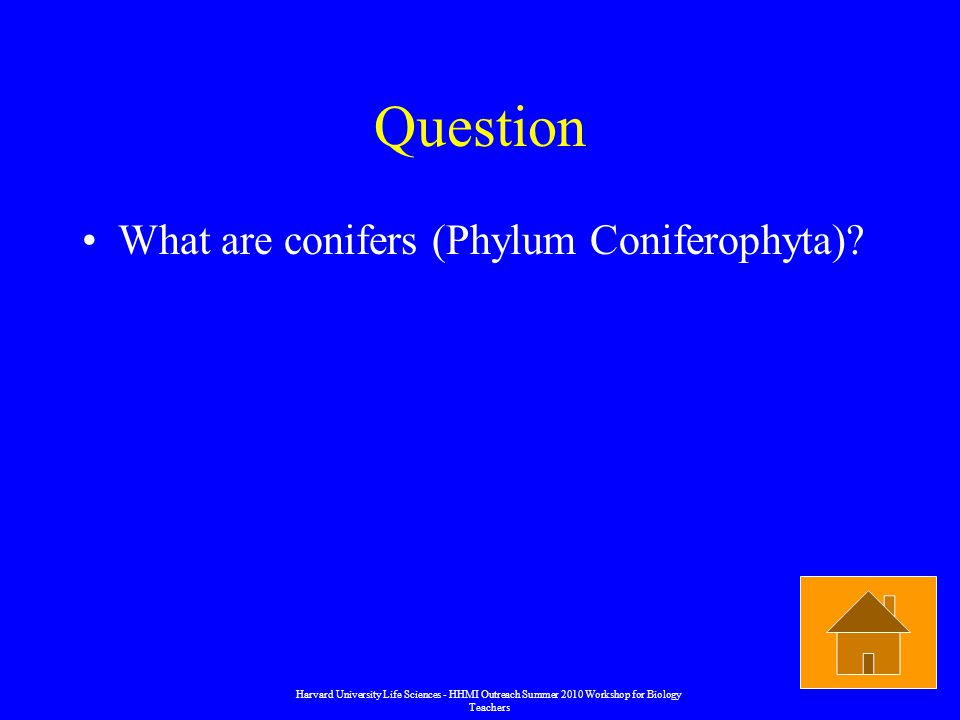 Question What are conifers (Phylum Coniferophyta).