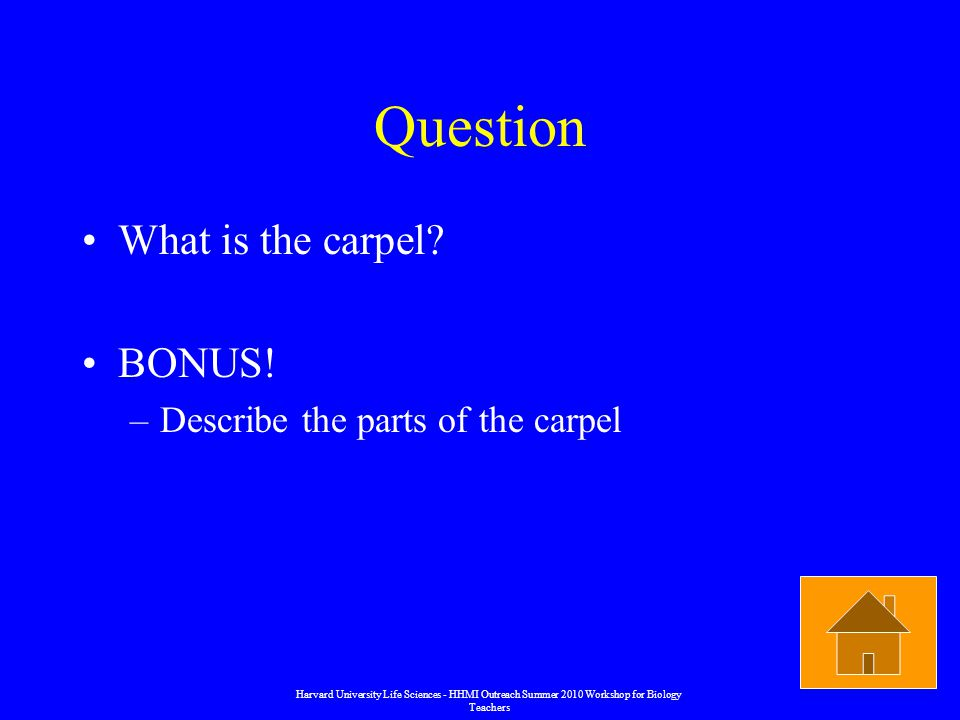 Question What is the carpel. BONUS.