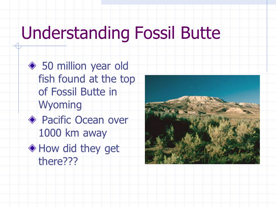 Understanding Fossil Butte 50 million year old fish found at the top of Fossil Butte in Wyoming Pacific Ocean over 1000 km away How did they get there