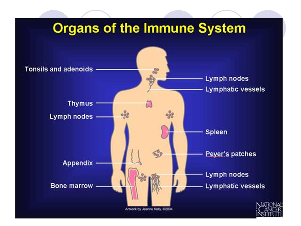 Immunology Immunology is a broad branch of biomedical science that ...