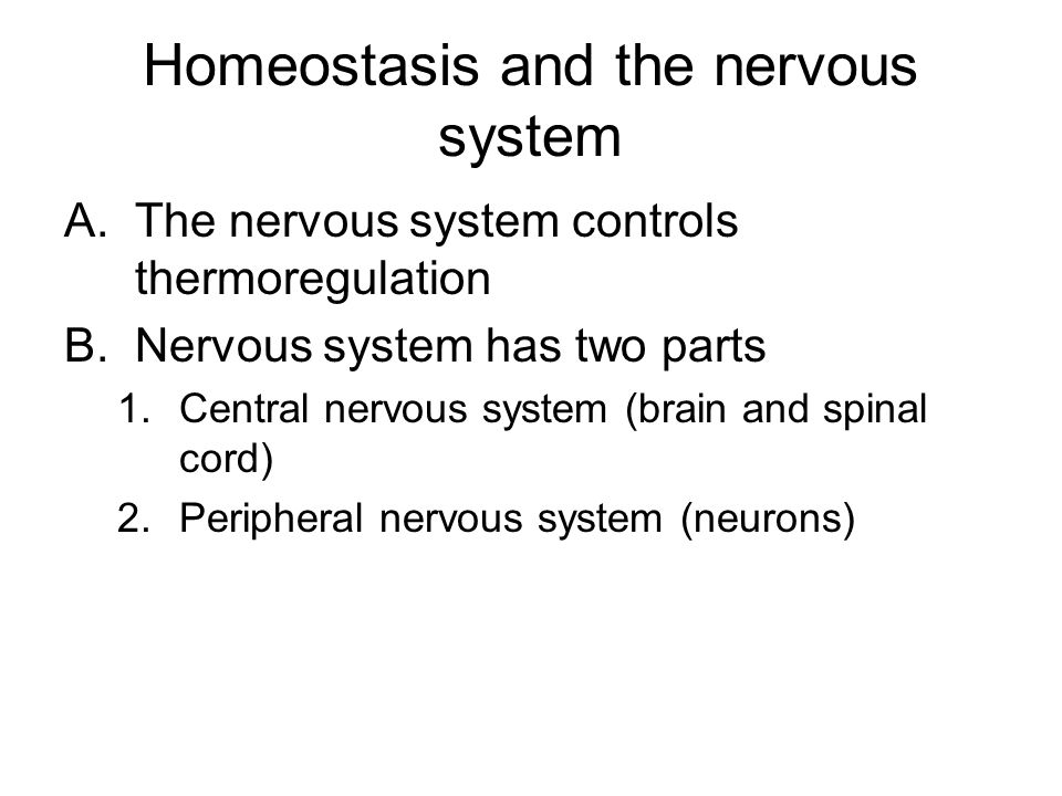 Homeostasis and the nervous system A.The nervous system controls thermoregulation B.Nervous system has two parts 1.Central nervous system (brain and spinal cord) 2.Peripheral nervous system (neurons)