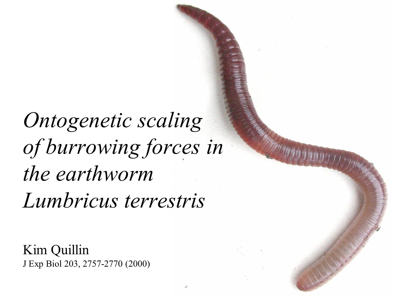 Ontogenetic scaling of burrowing forces in the earthworm Lumbricus ...
