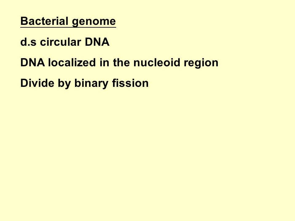 Bacterial genome d.s circular DNA DNA localized in the nucleoid region Divide by binary fission