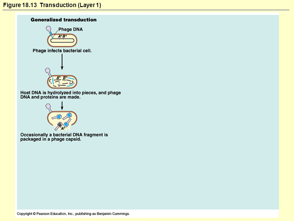 Figure Transduction (Layer 1)