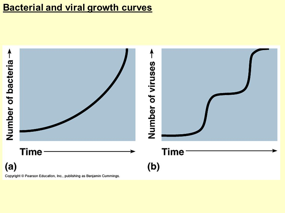 Bacterial and viral growth curves
