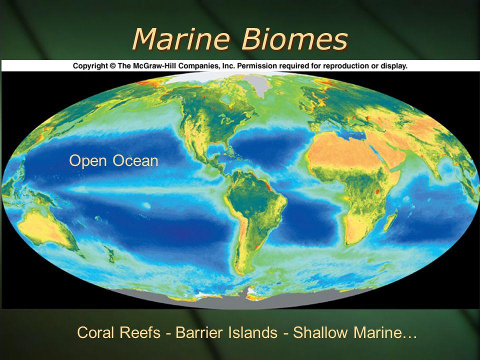 11 Marine Biomes Open Ocean Coral Reefs   Barrier Islands   Shallow Marineu2026