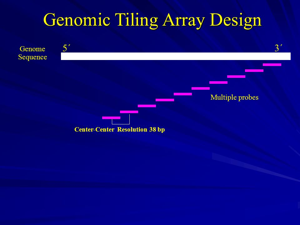 Genomic Tiling Array Design Genome Sequence Multiple probes 5´3´ Center-Center Resolution 38 bp