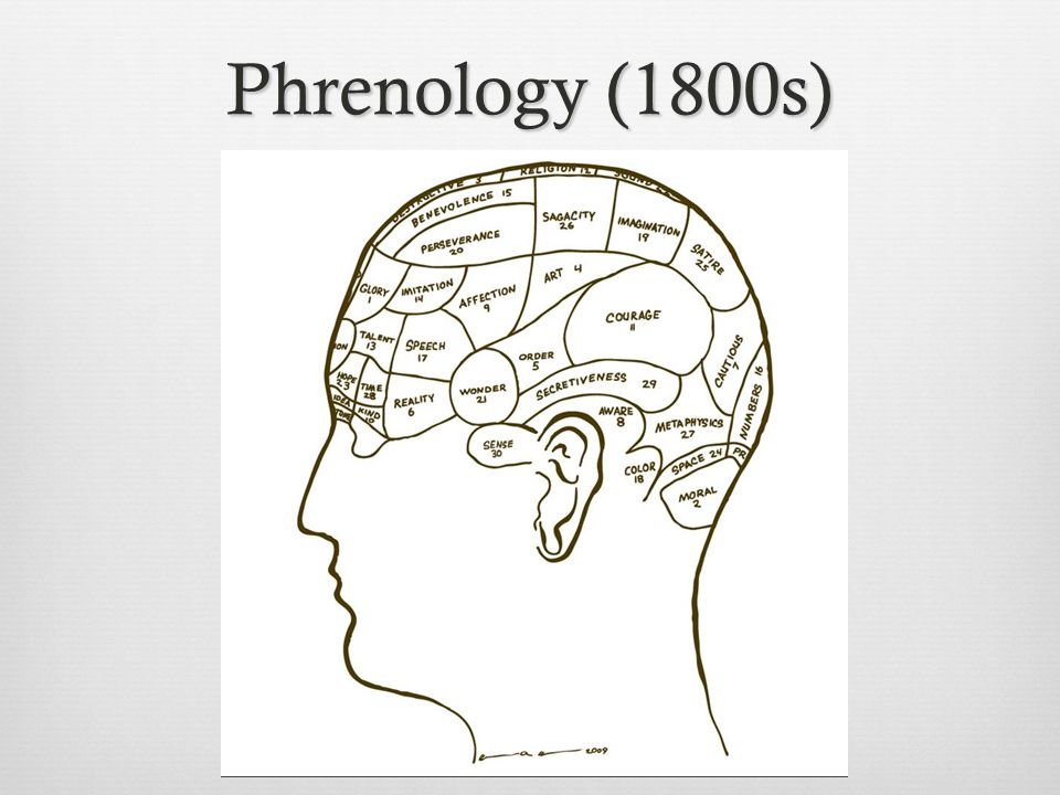 Chapter 2 neural communication the brain psychology 101 2 phrenology 1800s ccuart Gallery
