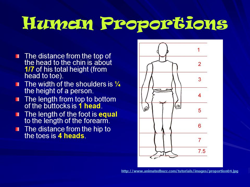 Human Proportions The distance from the top of the head to the chin is about 1/7 of his total height (from head to toe).