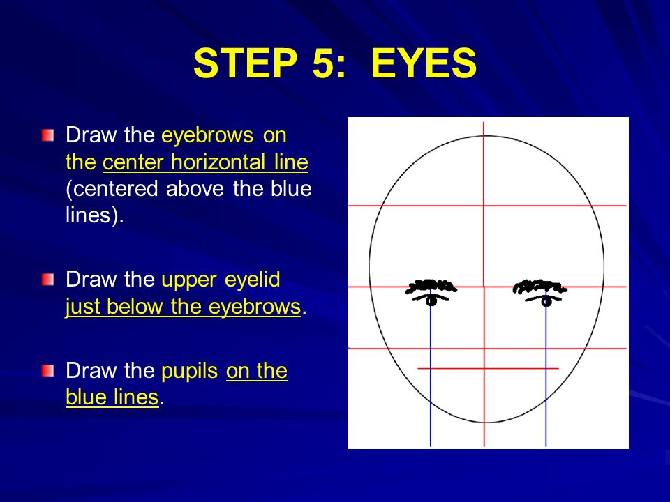 STEP 5: EYES Draw the eyebrows on the center horizontal line (centered above the blue lines).