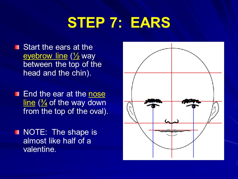 STEP 7: EARS Start the ears at the eyebrow line (½ way between the top of the head and the chin).