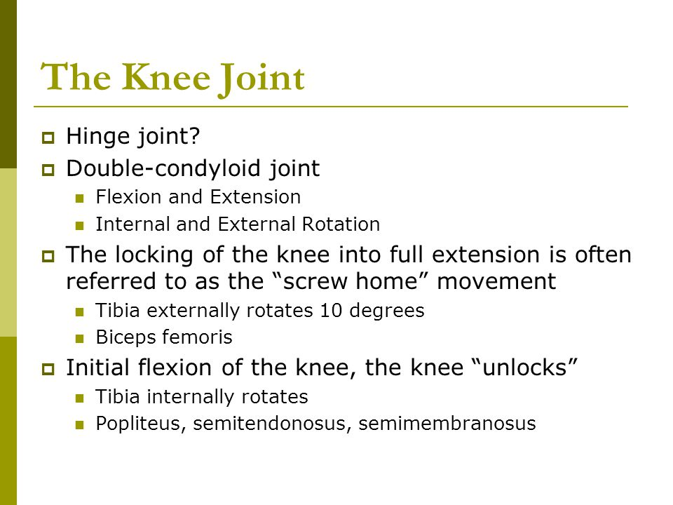 The Knee Joint.  Hinge joint?  Double-condyloid joint Flexion ...