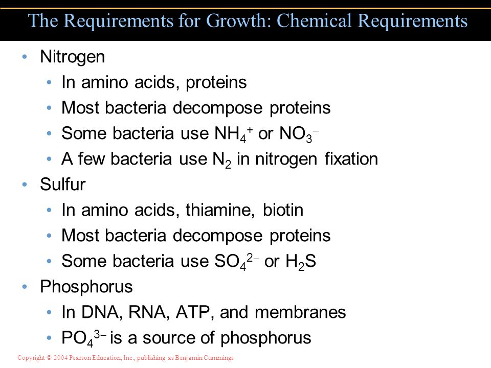 Copyright © 2004 Pearson Education, Inc., publishing as Benjamin Cummings Nitrogen In amino acids, proteins Most bacteria decompose proteins Some bacteria use NH 4 + or NO 3  A few bacteria use N 2 in nitrogen fixation Sulfur In amino acids, thiamine, biotin Most bacteria decompose proteins Some bacteria use SO 4 2  or H 2 S Phosphorus In DNA, RNA, ATP, and membranes PO 4 3  is a source of phosphorus The Requirements for Growth: Chemical Requirements