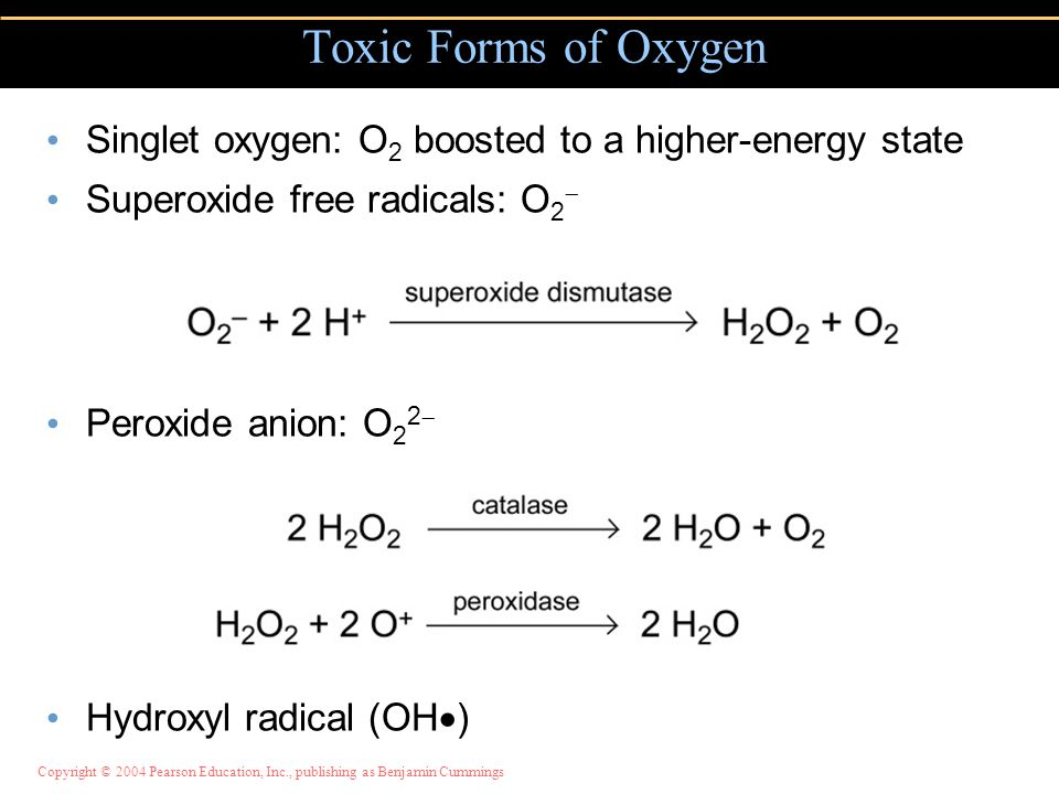 Copyright © 2004 Pearson Education, Inc., publishing as Benjamin Cummings Singlet oxygen: O 2 boosted to a higher-energy state Superoxide free radicals: O 2  Peroxide anion: O 2 2  Hydroxyl radical (OH  ) Toxic Forms of Oxygen
