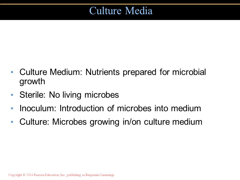 Copyright © 2004 Pearson Education, Inc., publishing as Benjamin Cummings Culture Medium: Nutrients prepared for microbial growth Sterile: No living microbes Inoculum: Introduction of microbes into medium Culture: Microbes growing in/on culture medium Culture Media
