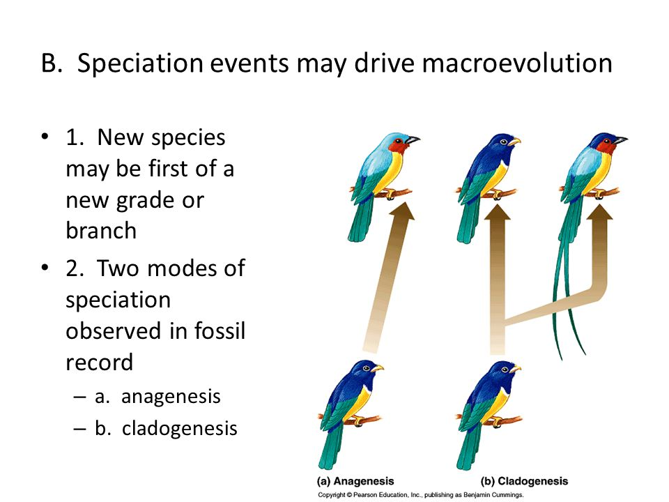 Speciation Creation Of Unique Gene Pools I Introduction A