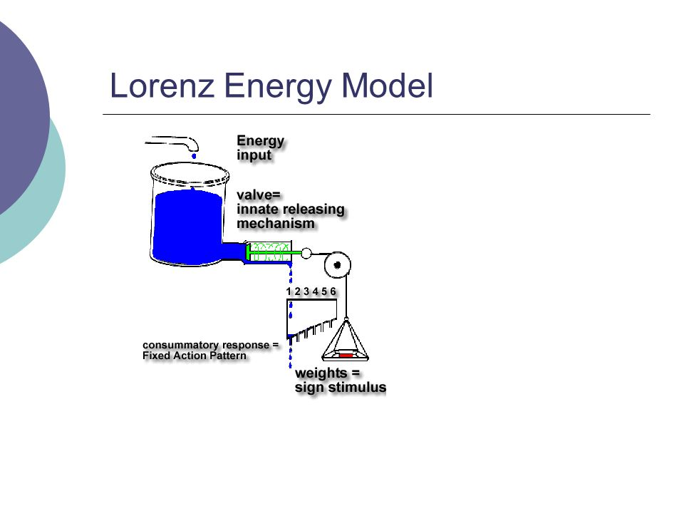 Lorenz Energy Model