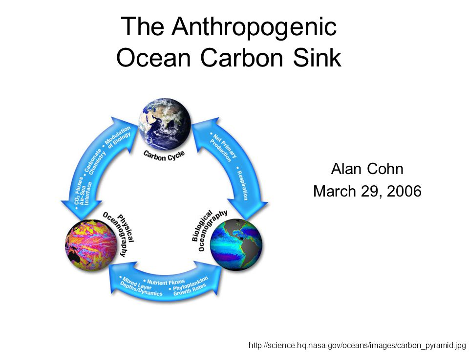 The Anthropogenic Ocean Carbon Sink Alan Cohn March 29,