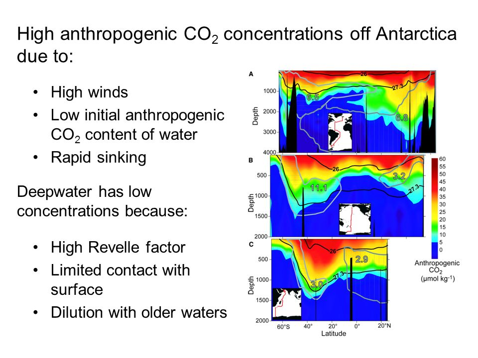 High winds Low initial anthropogenic CO 2 content of water Rapid sinking High anthropogenic CO 2 concentrations off Antarctica due to: Deepwater has low concentrations because: High Revelle factor Limited contact with surface Dilution with older waters