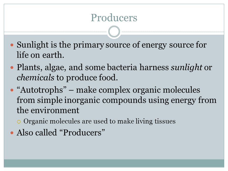 Producers Sunlight is the primary source of energy source for life on earth.
