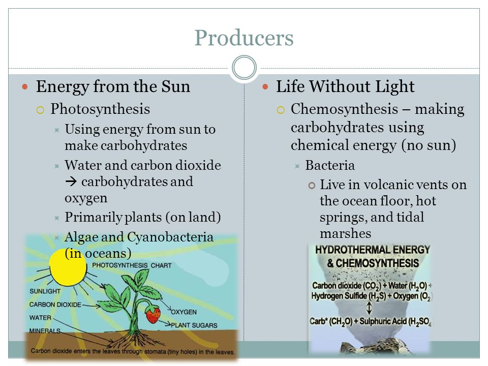 Producers Energy from the Sun  Photosynthesis  Using energy from sun to make carbohydrates  Water and carbon dioxide  carbohydrates and oxygen  Primarily plants (on land)  Algae and Cyanobacteria (in oceans) Life Without Light  Chemosynthesis – making carbohydrates using chemical energy (no sun)  Bacteria Live in volcanic vents on the ocean floor, hot springs, and tidal marshes