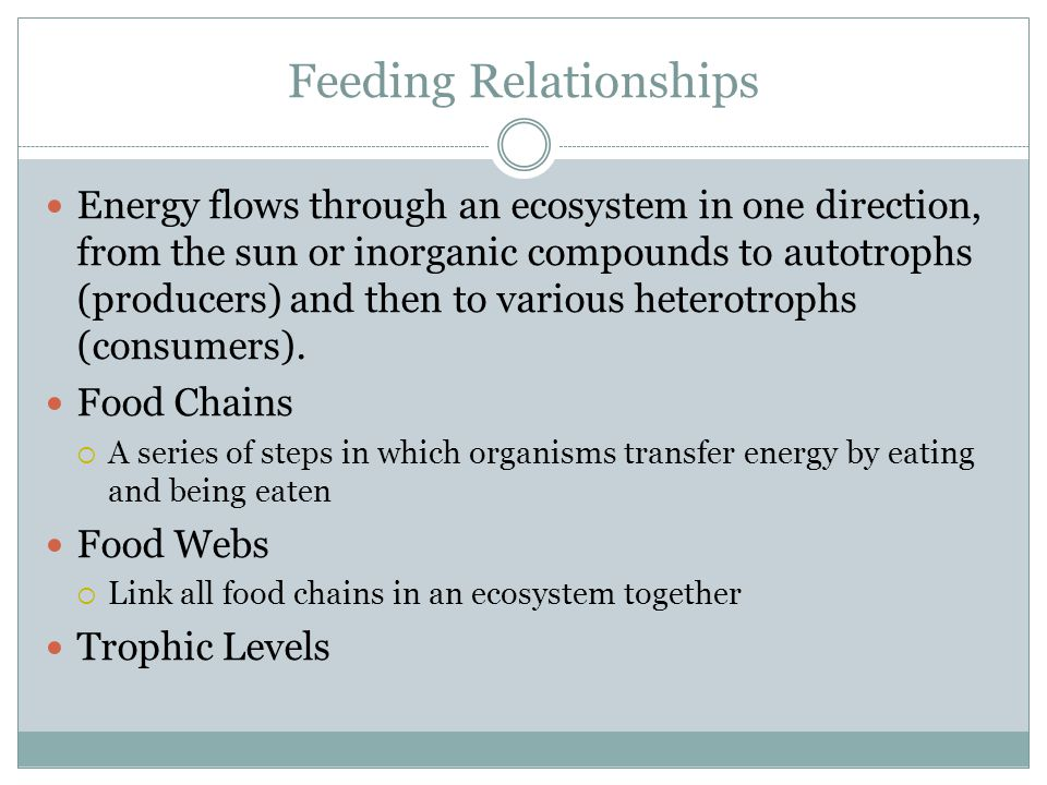 Energy flows through an ecosystem in one direction, from the sun or inorganic compounds to autotrophs (producers) and then to various heterotrophs (consumers).