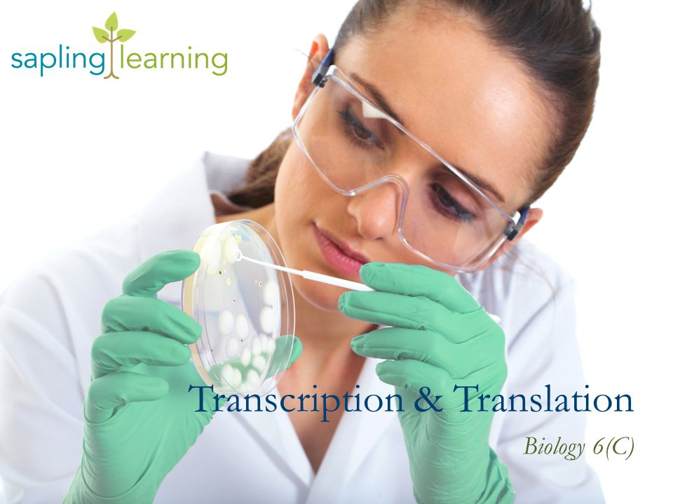 Transcription & Translation Biology 6(C)
