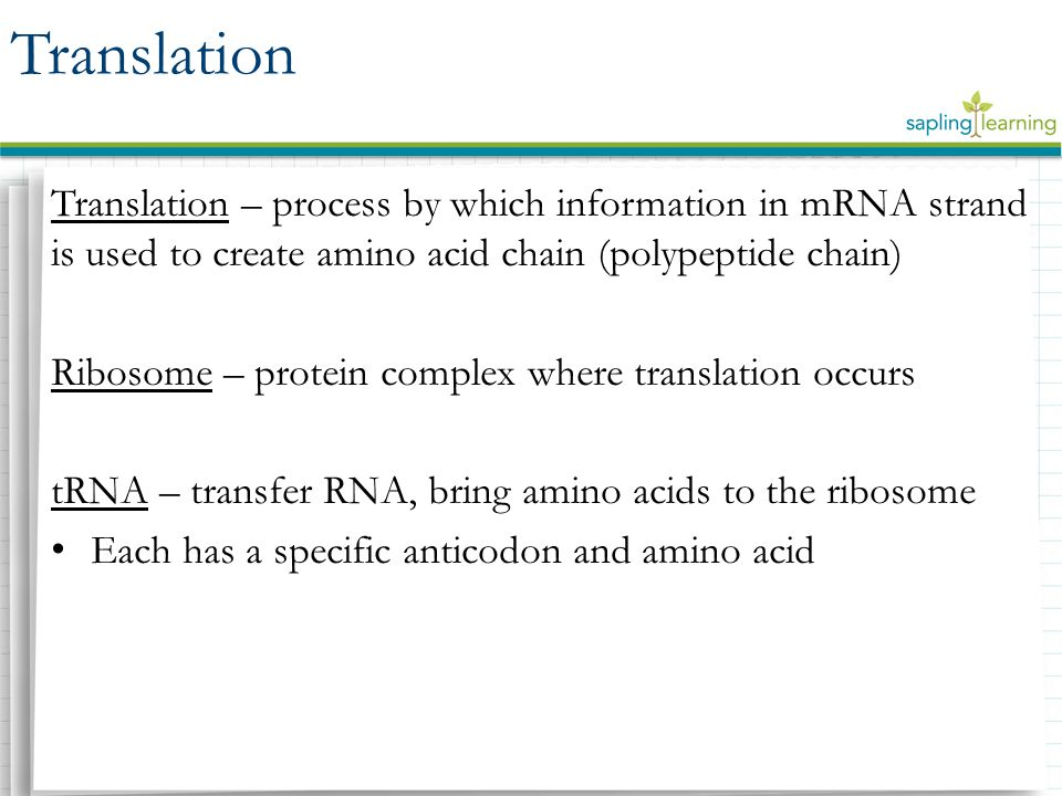 Translation – process by which information in mRNA strand is used to create amino acid chain (polypeptide chain) Ribosome – protein complex where translation occurs tRNA – transfer RNA, bring amino acids to the ribosome Each has a specific anticodon and amino acid Translation