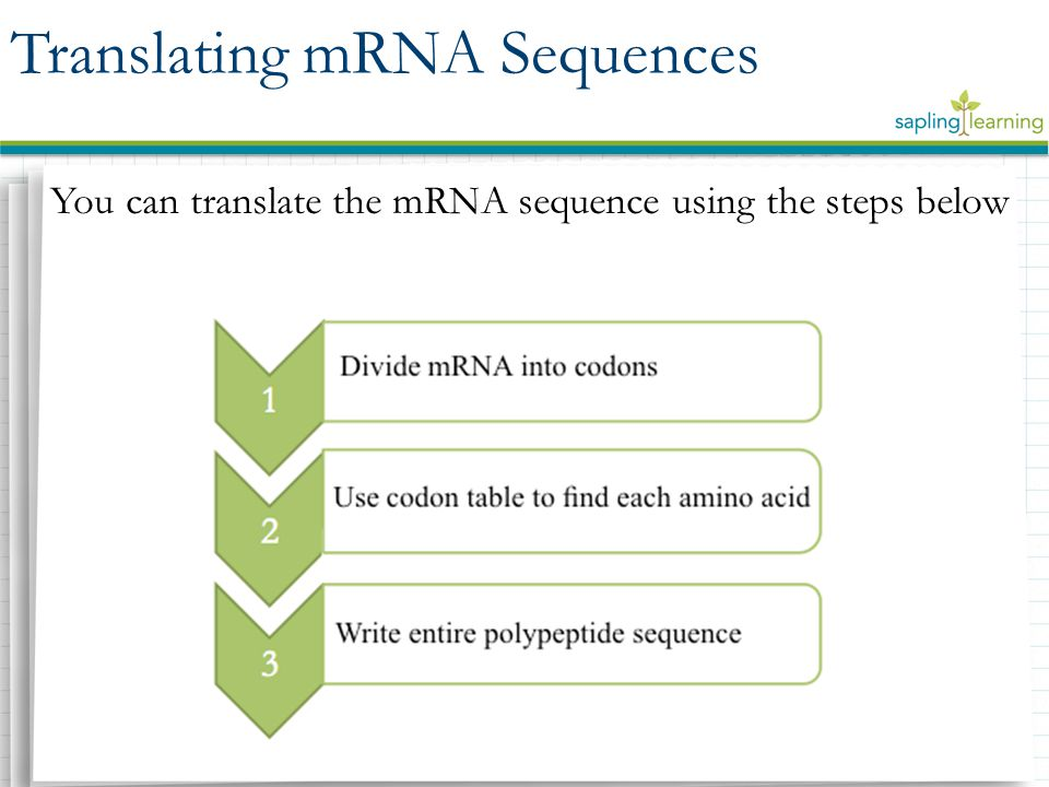 You can translate the mRNA sequence using the steps below Translating mRNA Sequences