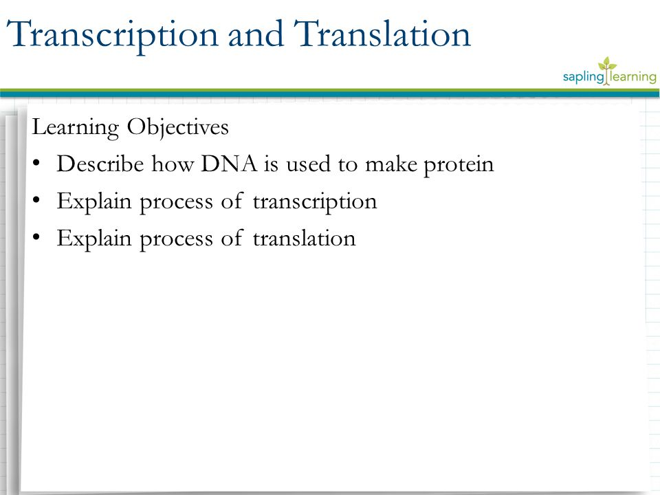 Learning Objectives Describe how DNA is used to make protein Explain process of transcription Explain process of translation Transcription and Translation