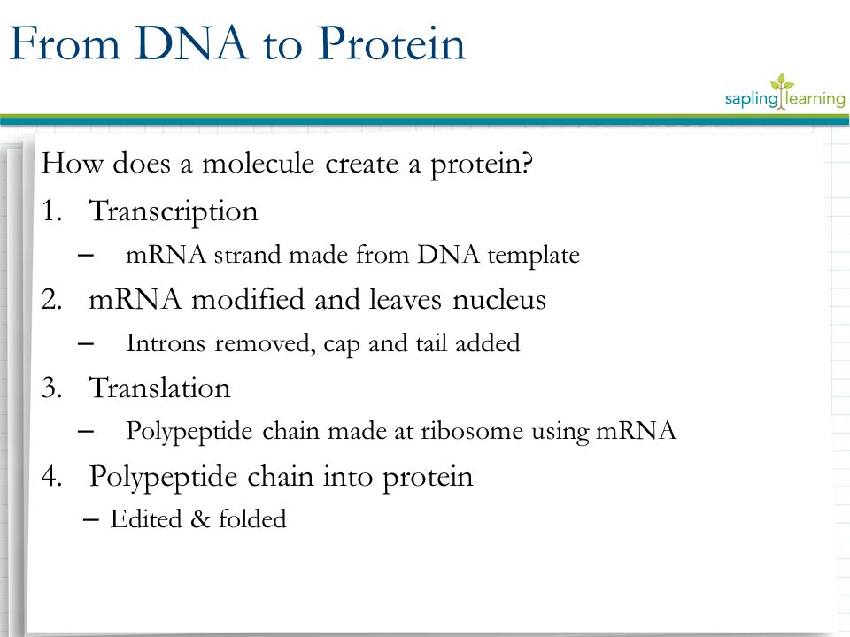 How does a molecule create a protein.