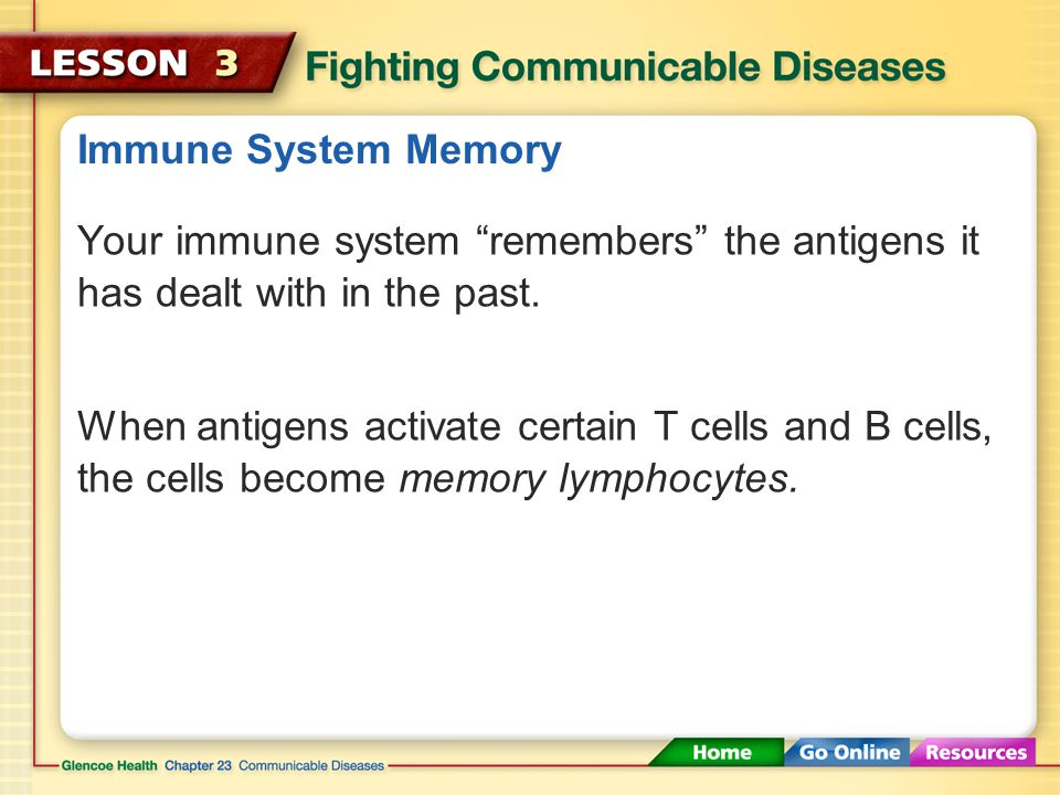 B Cells The different purposes of antibodies include attaching to antigens to mark them for destruction.